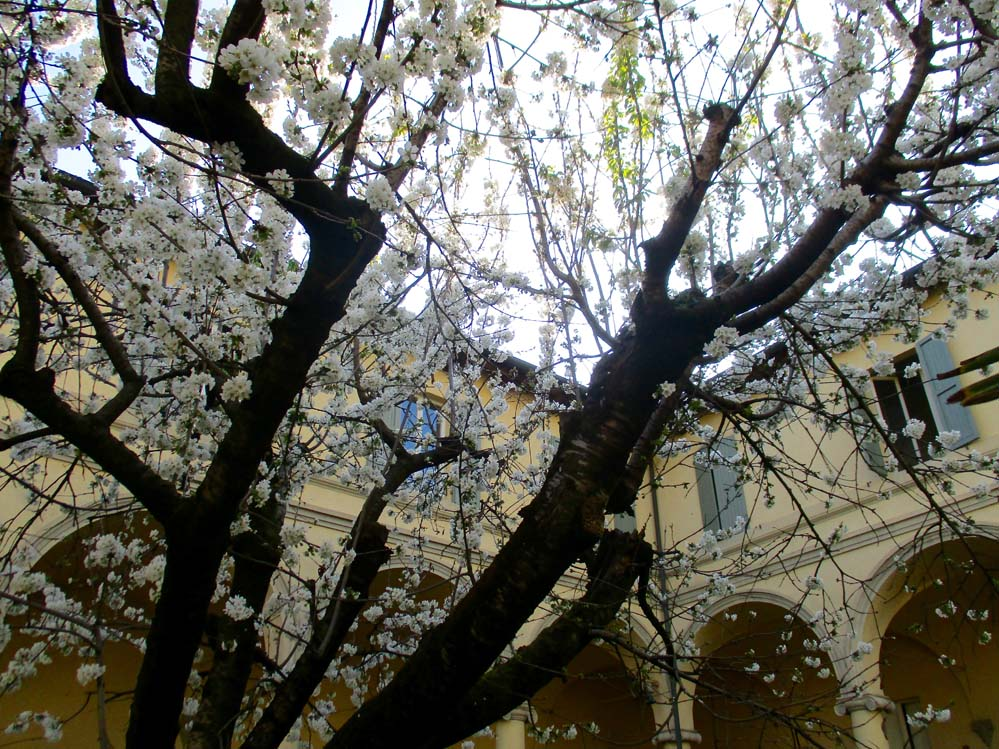 chiostro primavera